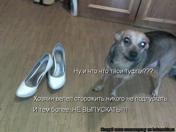 Котоматрица: Ну и что,что твои туфли??? И тем более..НЕ ВЫПУСКАТЬ!!!! Хозяин велел сторожить,никого не подпускать...