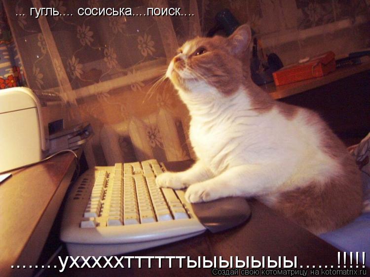 Котоматрица: ... гугль.... сосиська....поиск.... ........ухххххттттттыыыыыыы......!!!!!