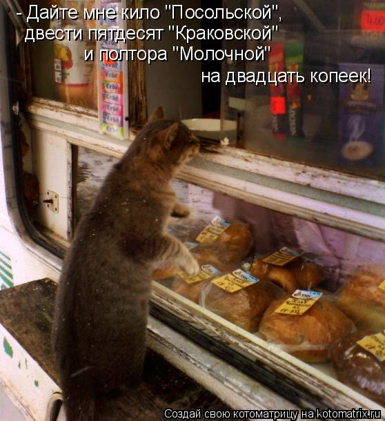 """Котоматрица: - Дайте мне кило """"Посольской"""",  двести пятдесят """"Краковской"""" и полтора """"Молочной"""" на двадцать копеек!"""