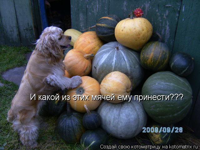 Котоматрица: И какой из этих мячей ему принести???