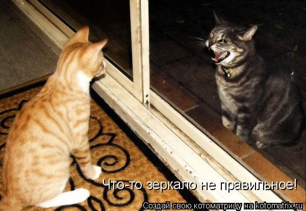 Котоматрица: Что-то зеркало не правильное!