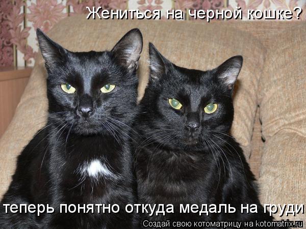 Котоматрица: Жениться на черной кошке? теперь понятно откуда медаль на груди!