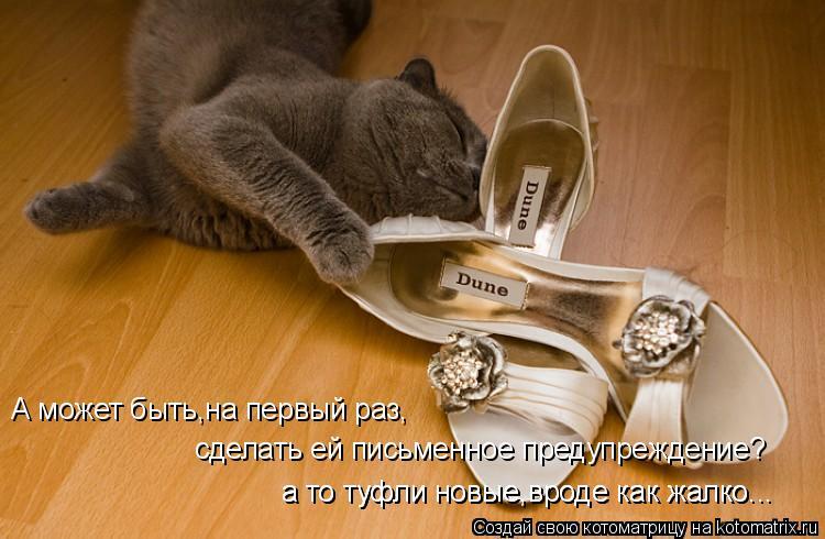 Котоматрица: А может быть,на первый раз, сделать ей письменное предупреждение? а то туфли новые,вроде как жалко... а то туфли новые,вроде как жалко...
