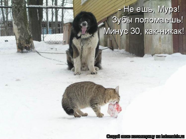 Котоматрица: - Не ешь, Мурз!  Зубы поломаешь! Минус 30, как-никак!