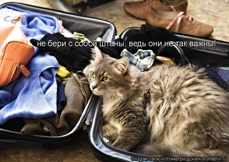 Котоматрица: не бери с собой штаны, ведь они не так важны!