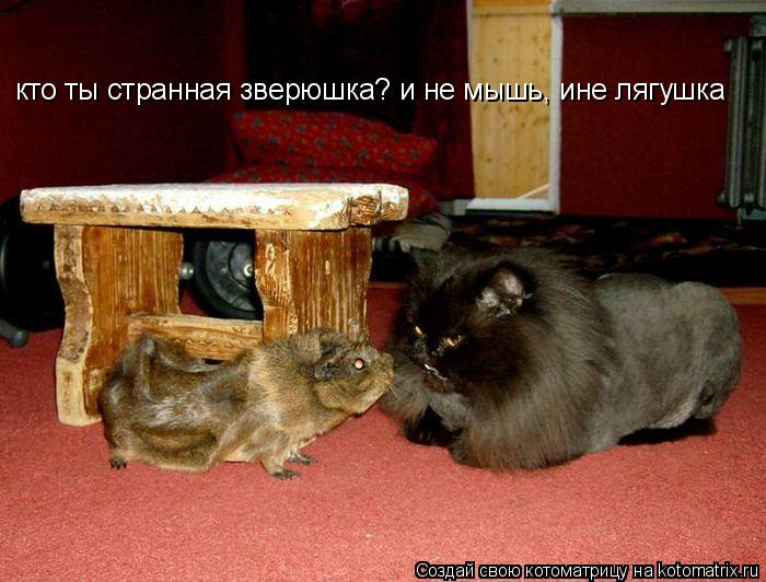 Котоматрица: кто ты странная зверюшка? и не мышь, ине лягушка