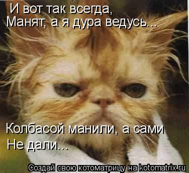 Котоматрица: И вот так всегда,  Манят, а я дура ведусь... Колбасой манили, а сами Не дали...
