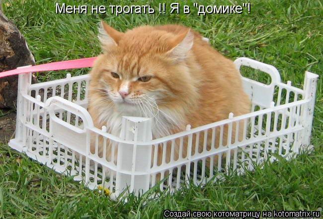 """Котоматрица: Меня не трогать !! Я в """"домике""""!"""