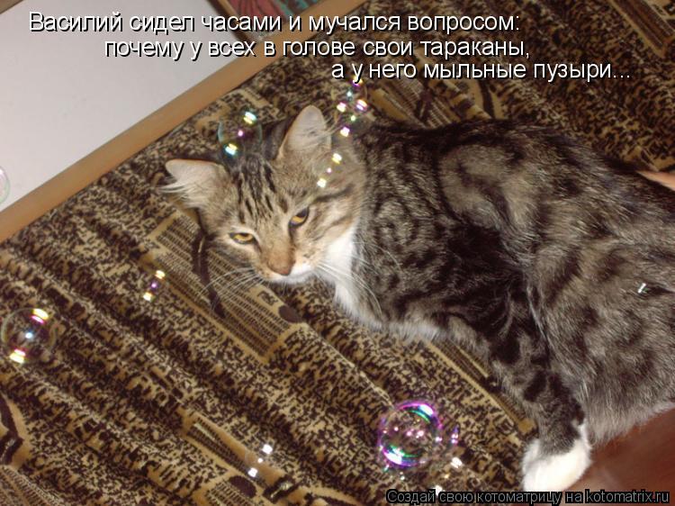 Котоматрица: Василий сидел часами и мучался вопросом: почему у всех в голове свои тараканы, а у него мыльные пузыри...