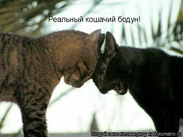 Котоматрица: Реальный кошачий бодун!