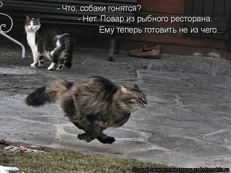 Котоматрица: - Что, собаки гонятся? - Нет. Повар из рыбного ресторана.  Ему теперь готовить не из чего...