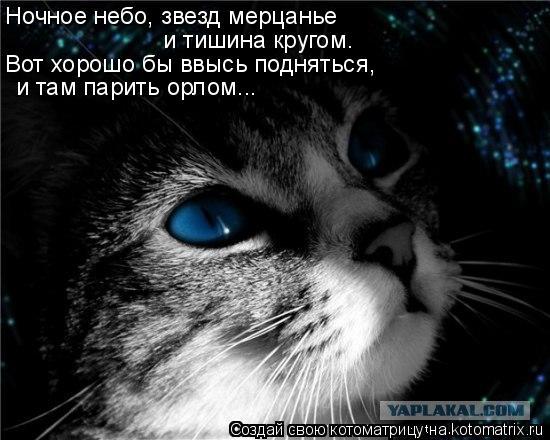 Котоматрица: Ночное небо, звезд мерцанье и тишина кругом. Вот хорошо бы ввысь подняться, и там парить орлом...
