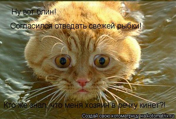 Котоматрица: Ну вот блин! Согласился отведать свежей рыбки! Кто же знал, что меня хозяин в речку кинет?!