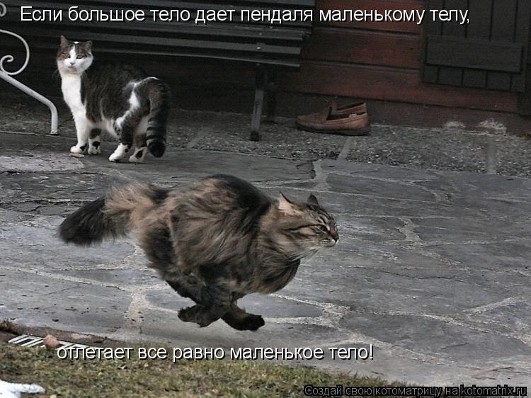 Котоматрица: Если большое тело дает пендаля маленькому телу, отлетает все равно маленькое тело!