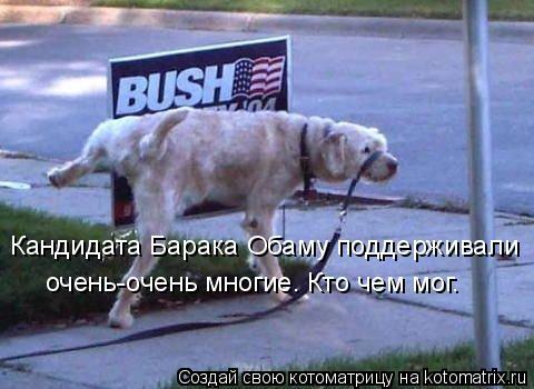 Котоматрица: Кандидата Барака Обаму поддерживали  очень-очень многие. Кто чем мог.