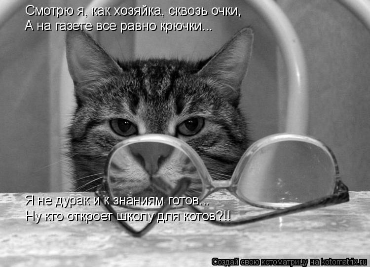 Котоматрица: Смотрю я, как хозяйка, сквозь очки, А на газете все равно крючки... Я не дурак и к знаниям готов... Ну кто откроет школу для котов?!!
