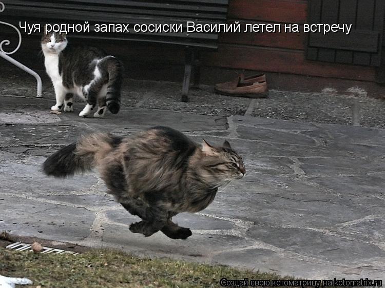 Котоматрица: Чуя родной запах сосиски Василий летел на встречу