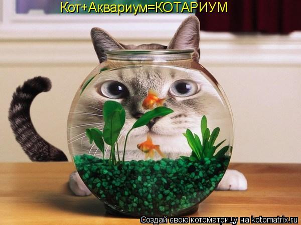 Котоматрица: Кот+Аквариум=КОТАРИУМ