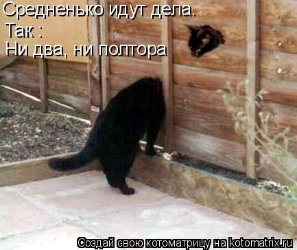 Котоматрица: Так :  Ни два, ни полтора Средненько идут дела.