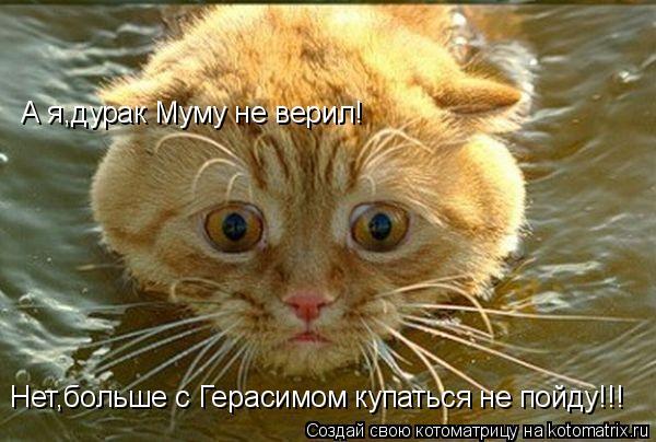 Котоматрица: Нет,больше с Герасимом купаться не пойду!!! А я,дурак Муму не верил!