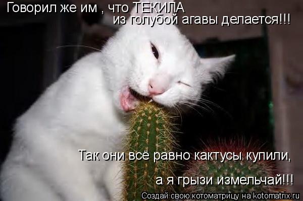 Котоматрица: Говорил же им , что ТЕКИЛА   из голубой агавы делается!!! Так они всё равно кактусы купили, а я грызи измельчай!!!
