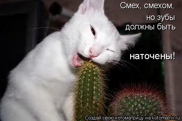 Котоматрица: Смех, смехом,  но зубы  должны быть наточены!