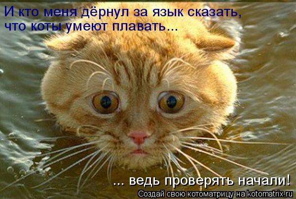 Котоматрица: И кто меня дёрнул за язык сказать, что коты умеют плавать... ... ведь проверять начали!