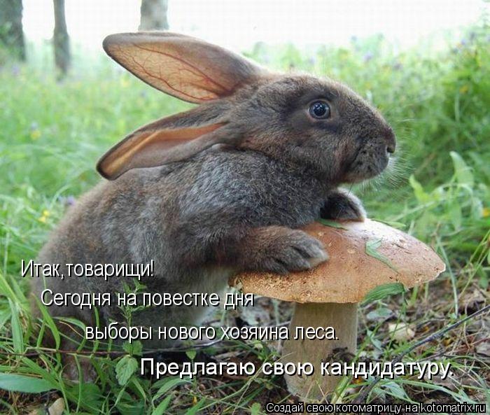 Котоматрица: Предлагаю свою кандидатуру. Итак,товарищи! Сегодня на повестке дня  выборы нового хозяина леса.