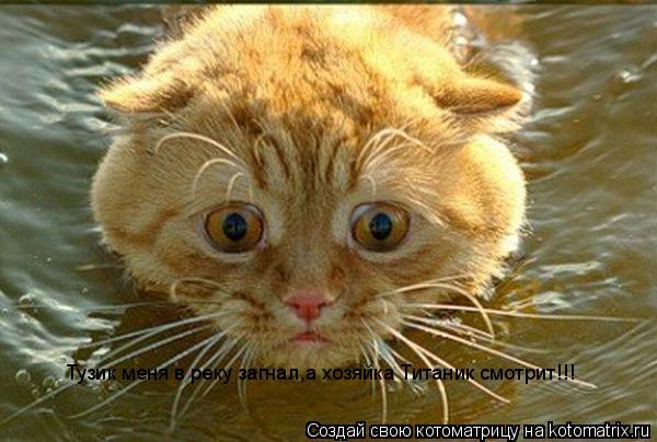 Котоматрица: Тузик меня в реку загнал,а хозяйка Титаник смотрит!!!