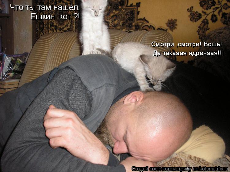 Котоматрица: Что ты там нашел,  Ешкин  кот ?! Смотри ,смотри! Вошь! Да такааая ядренаая!!!