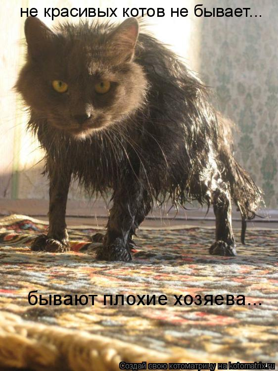 Котоматрица: не красивых котов не бывает... бывают плохие хозяева...