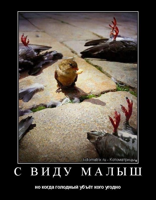 Котоматрица: с виду малыш но когда голодный убъёт кого угодно