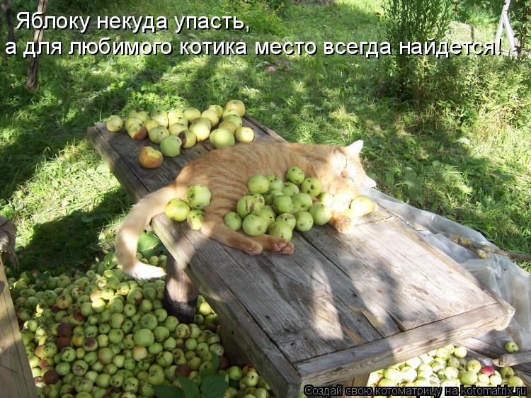 Котоматрица: Яблоку некуда упасть,  а для любимого котика место всегда найдется!