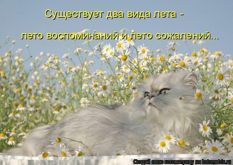Котоматрица: Существует два вида лета - лето воспоминаний и лето сожалений...