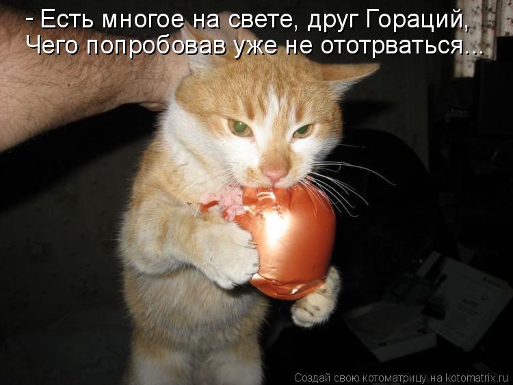 Котоматрица: Есть многое на свете, друг Гораций, Чего попробовав уже не ототрваться... -