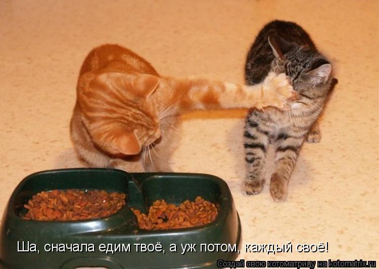 Котоматрица: Ша, сначала едим твоё, а уж потом, каждый своё!
