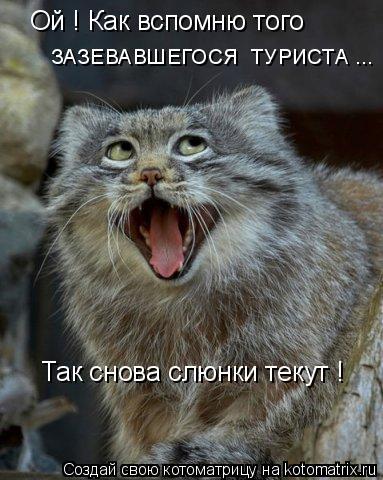 Котоматрица: Ой ! Как вспомню того  ЗАЗЕВАВШЕГОСЯ  ТУРИСТА ... Так снова слюнки текут !