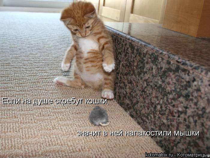 Котоматрица: Если на душе скребут кошки, значит в ней напакостили мышки