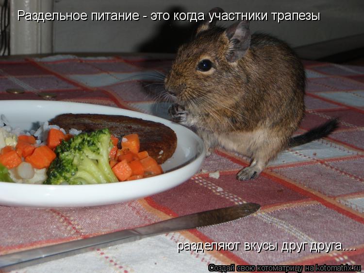 Котоматрица: Раздельное питание - это когда участники трапезы разделяют вкусы друг друга....