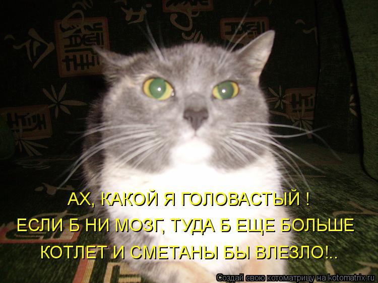 Котоматрица: АХ, КАКОЙ Я ГОЛОВАСТЫЙ ! ЕСЛИ Б НИ МОЗГ, ТУДА Б ЕЩЕ БОЛЬШЕ КОТЛЕТ И СМЕТАНЫ БЫ ВЛЕЗЛО!..
