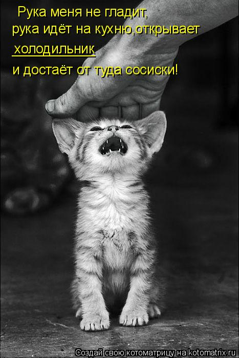 Котоматрица: Рука меня не гладит, рука идёт на кухню,открывает холодильник ___________ и достаёт от туда сосиски!