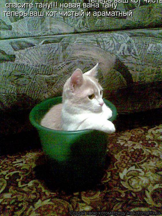 Котоматрица: спасите тану!!! новая вана тану   теперь ваш кот чистый и араматный теперь ваш кот чистый и араматный