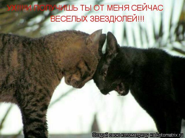 Котоматрица: УХ!!!!И ПОЛУЧИШЬ ТЫ ОТ МЕНЯ СЕЙЧАС ВЕСЕЛЫХ ЗВЕЗДЮЛЕЙ!!!