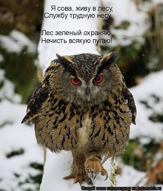 Котоматрица: Я сова, живу в лесу, Службу трудную несу Лес зеленый охраняю Нечисть всякую пугаю!