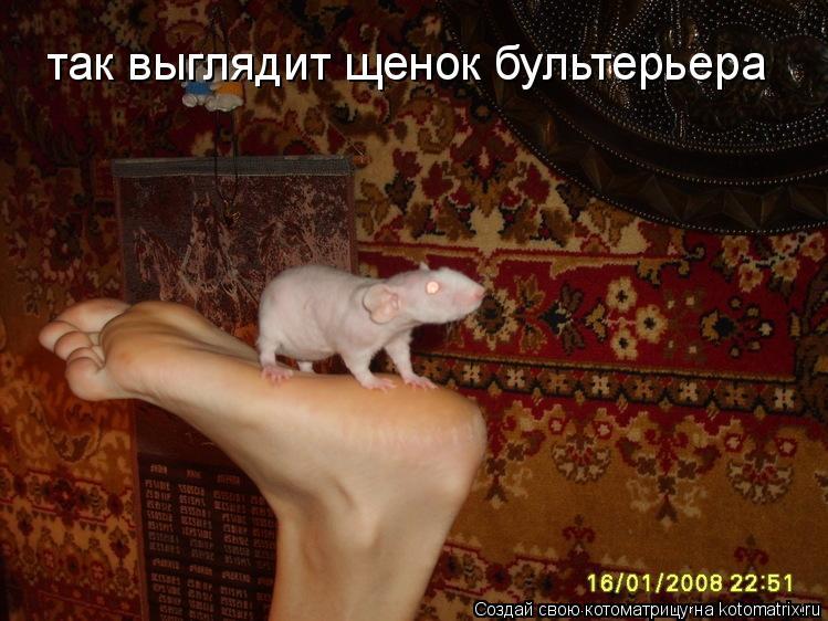 Котоматрица: так выглядит щенок бультерьера