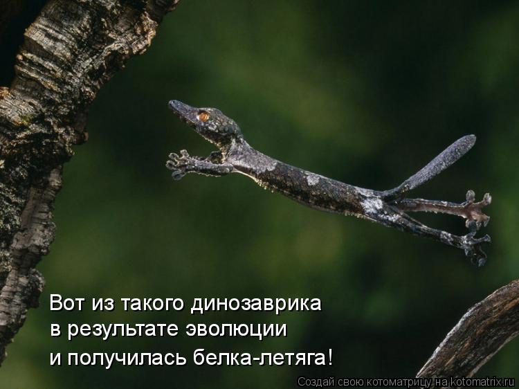Котоматрица: Вот из такого динозаврика  в результате эволюции  и получилась белка-летяга!