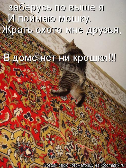 Котоматрица: заберусь по выше я И поймаю мошку. Жрать охото мне друзья, В доме нет ни крошки!!!