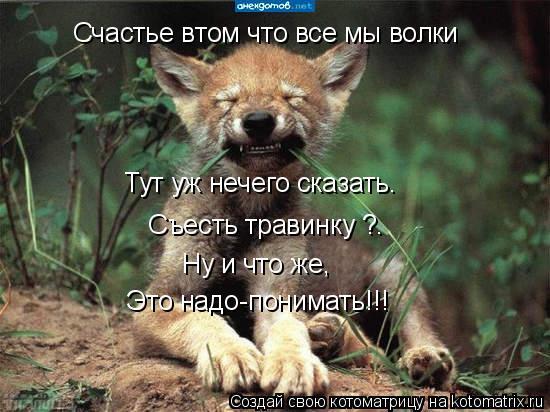 Котоматрица: Счастье втом что все мы волки Тут уж нечего сказать. Съесть травинку ?. Ну и что же, Это надо-понимать!!!