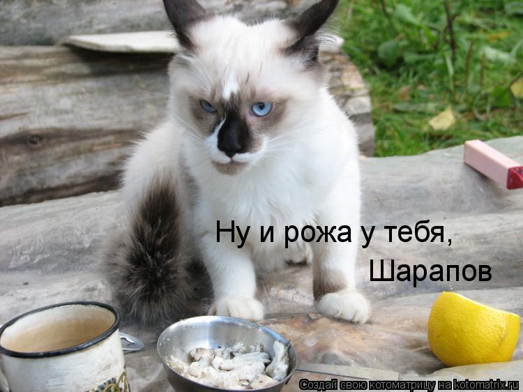 Котоматрица: Ну и рожа у тебя,  Шарапов