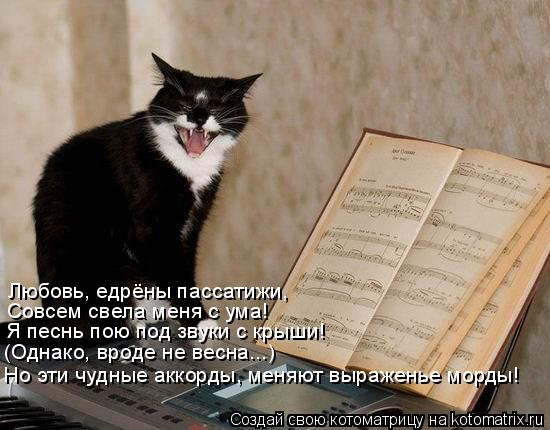 Котоматрица: Любовь, едрёны пассатижи, Совсем свела меня с ума! Я песнь пою под звуки с крыши! (Однако, вроде не весна...) Но эти чудные аккорды, меняют выраж
